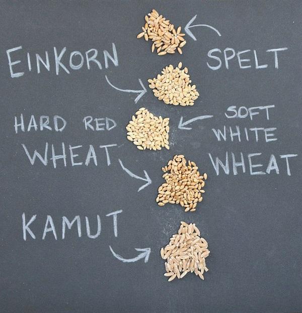 Comparing-Einkorn-and-Grains-2